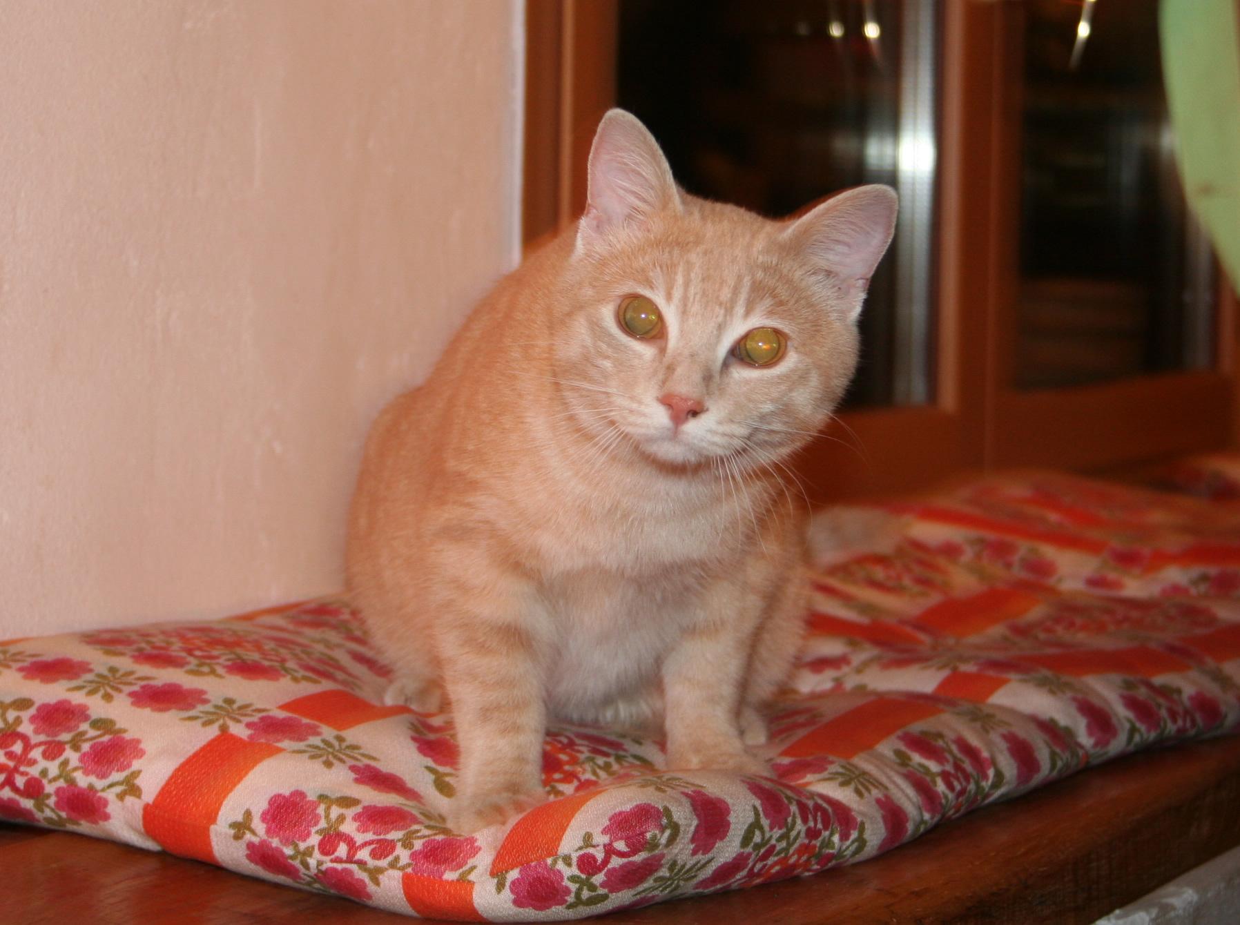 Uno dei miei gatti