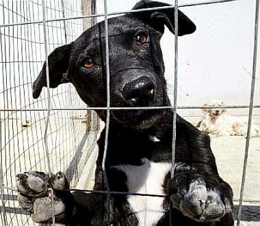 Cane in gabbia (foto generica)