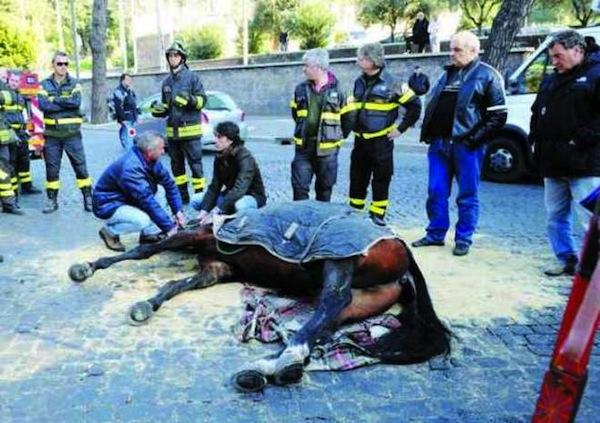 Cavallo sviene Roma - Botticelle