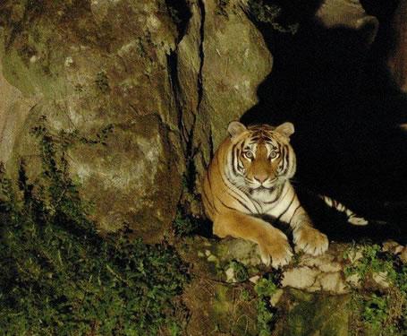 Foto Pubblicità Bioparco Safari Night