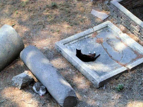 gatto-torre-argentina