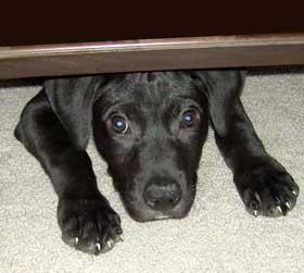 cane-impaurito