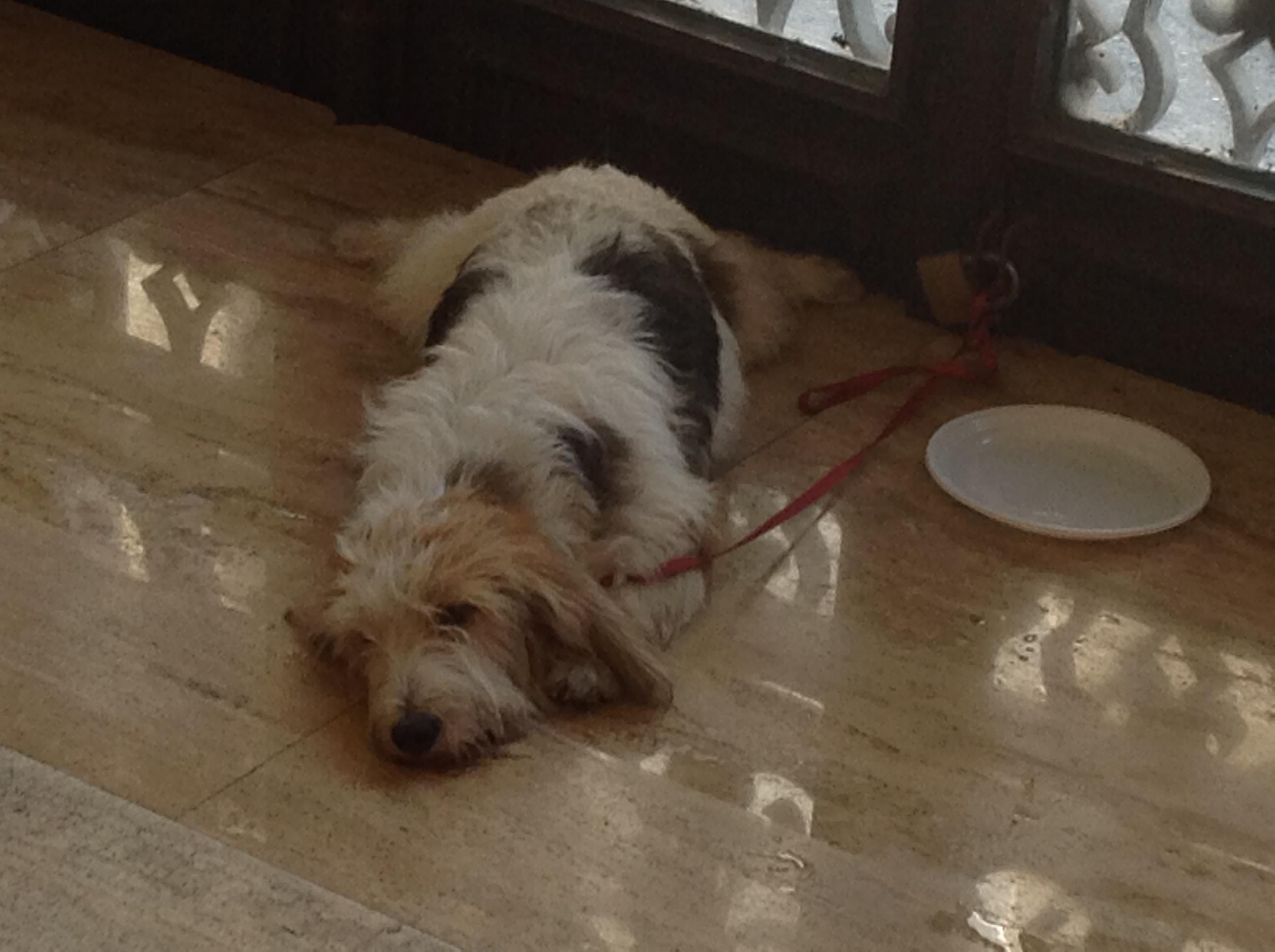 cane salvato in senato