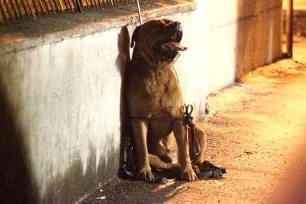 cane-impiccato