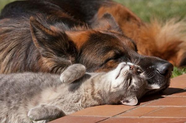 cane-gatto-amicizia