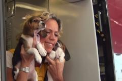 cirinna-beagle-arrivo-3