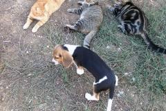 Libera con i gatti