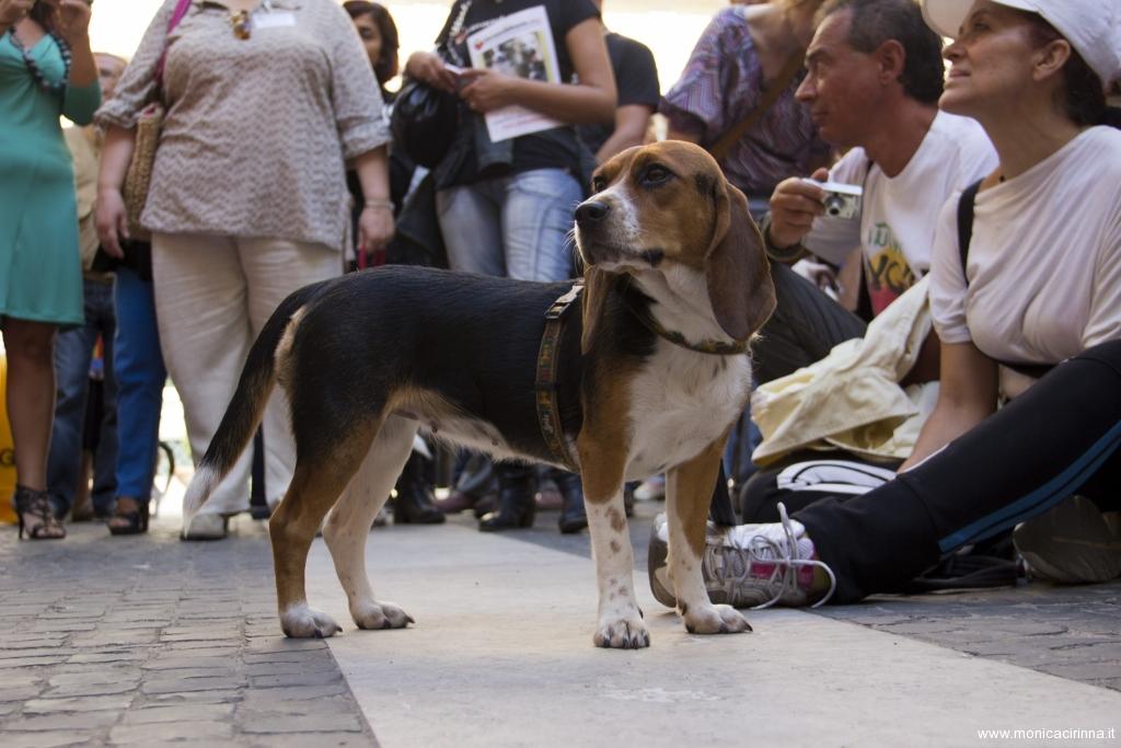 cirinn-beagle-provincia-roma59-1024x683