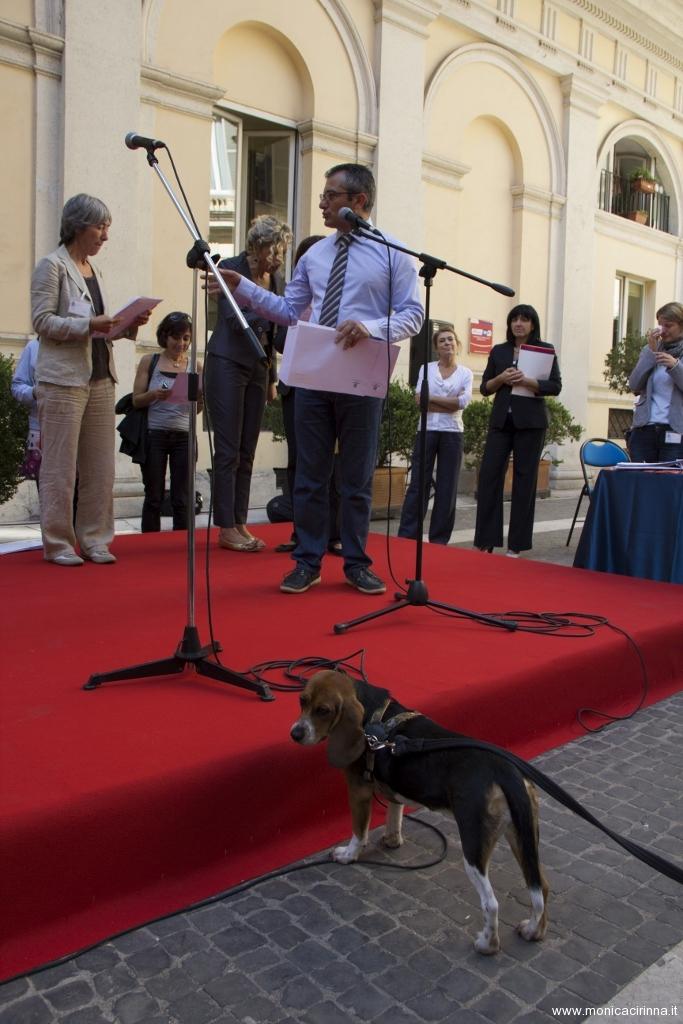 cirinn-beagle-provincia-roma77-683x1024