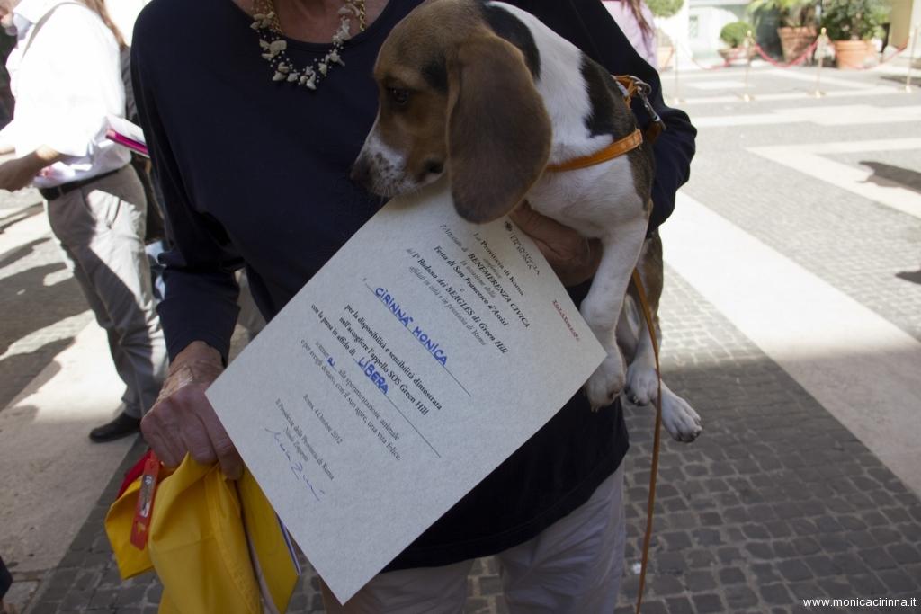 cirinn-beagle-provincia-roma81-1024x683