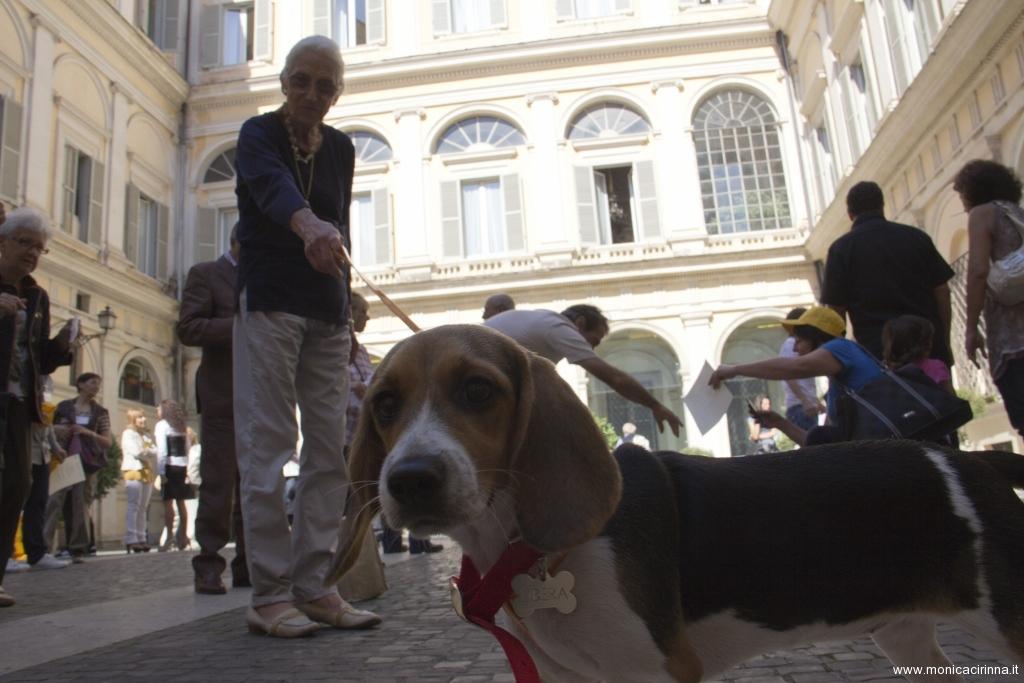 cirinn-beagle-provincia-roma92-1024x683