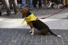 cirinn-beagle-provincia-roma65-1024x683