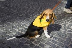 cirinn-beagle-provincia-roma71-1024x683