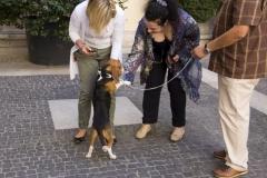 cirinn-beagle-provincia-roma72-1024x683