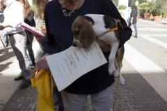 cirinn-beagle-provincia-roma79-1024x683