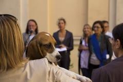 cirinn-beagle-provincia-roma87-1024x683
