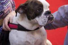 cirinn-beagle-provincia-roma97-1024x683